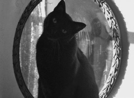 Una stupenda poesia di Charles Baudelaire sul gatto, fata o forse dio